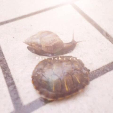 蜗牛和乌龟赛跑 Somesome的美拍