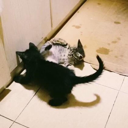 昨晚看兩只可愛小貓咪😚