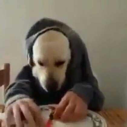 狗狗學人吃東西,太可愛了😘😘