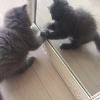 月饼第一次照镜子#宠物##宠物#