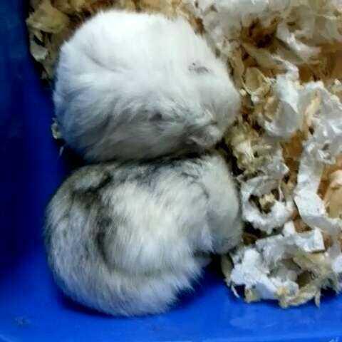 什么动物睡觉藏头缩尾