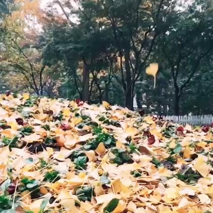 【舒缓】《A Single Rose》舒缓的吉他撩拨心弦,适合用来感伤秋天。搭配Rain、倒带、时光胶片、黑与白等都很有怀旧的fu哦~试一试吧,当一回文艺的小青年。视频来源:@Opus3-
