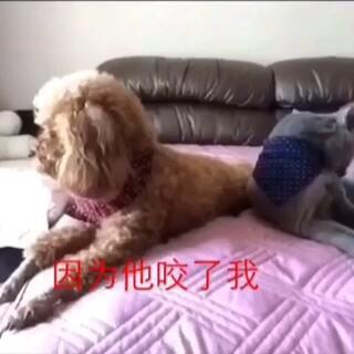 #家有猫狗猴系列剧# 《吵架1》 #宠物#