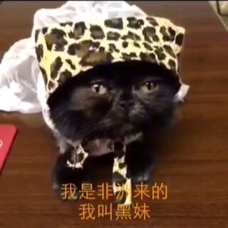 #家有猫狗猴系列剧#《夜店》第二段 喵麻制作的小故事纯属搞笑!#宠物# 喜欢点赞加评论😂 以后喵麻抽空就编辑搞笑发给大家! 新浪微博:喵汪悟空