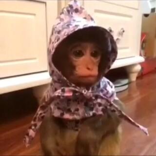 #家有猫狗猴系列剧#《夜店》第三段 喵麻制作的小故事纯属搞笑!#宠物##夜店#