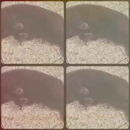 这只大懒猫……