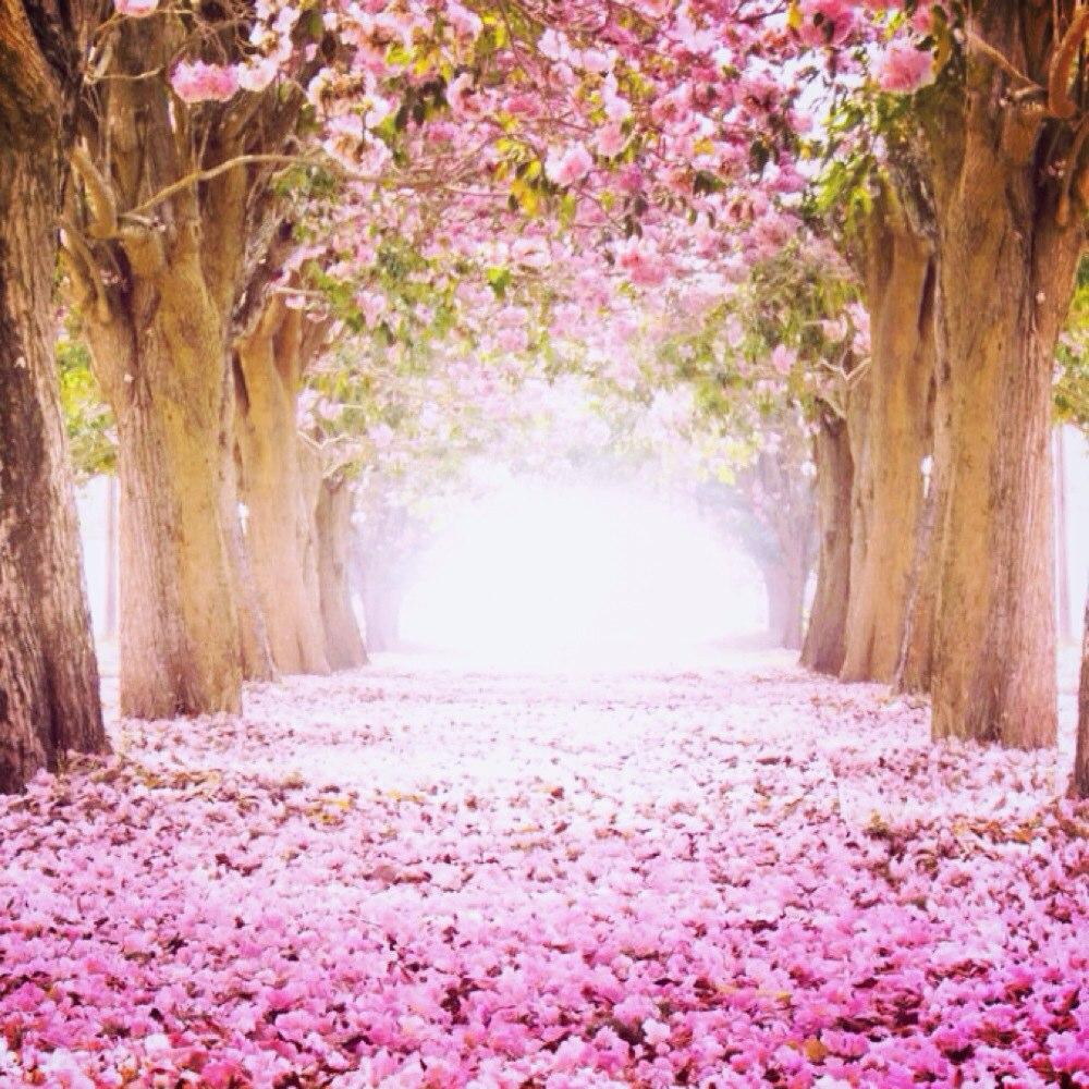 雨中的梧桐树的美拍