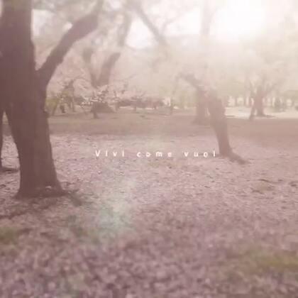 cherry blossom 🇯🇵