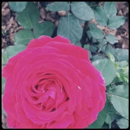【大👂柒宝美拍】15-04-06 14:00