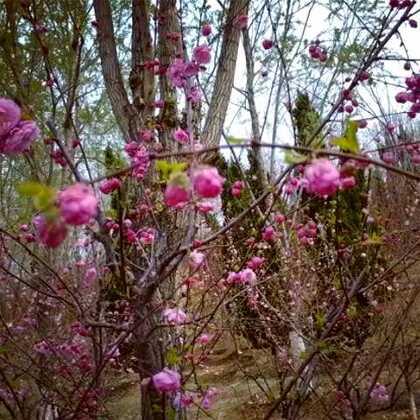 #阳春三月,春暖花开#✌