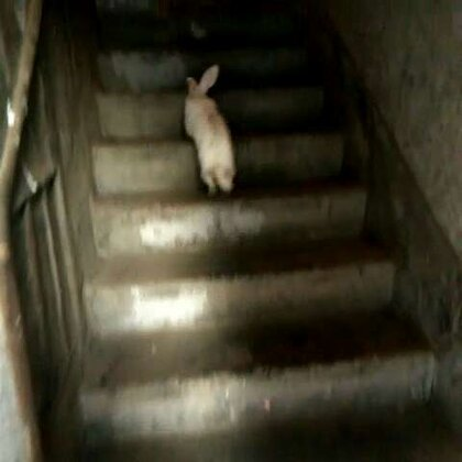 上楼与下楼#宠物#