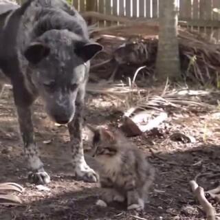 #宠物#美猎狗守护流浪猫,好有爱…