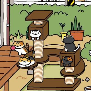 #猫咪后院#