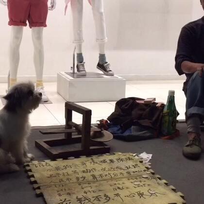 狗狗成精啦🙀#随手拍##狗狗#
