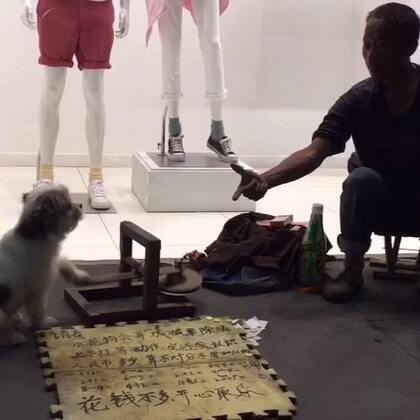 狗狗成精了3🙀🙀🙀#随手拍##狗狗#