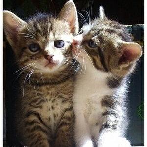 #宠物间的有爱瞬间#