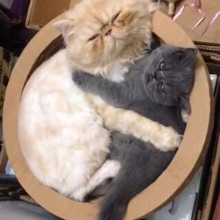 我要天天与你相对夜夜拥你入睡#宠物间的有爱瞬间#