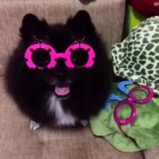 不要告诉汪你们看不到眼睛在哪里~鸭梨大啊!#眉毛戴眼镜##宠物##随手拍#