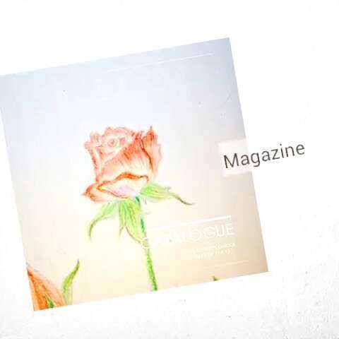 图图画的第一幅彩色铅笔画 玫瑰????图片