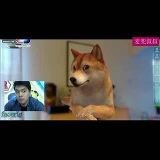 #搞笑##逗比#清晰的原视频找到啦,柴犬的表情实在太魔性和销魂了!请火速转给朋友们一块儿欣赏!😏😂😂
