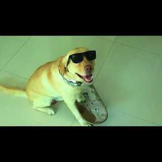 """#小布的日常生活# S01E13 """"yo sup dooog"""" #宠物#"""