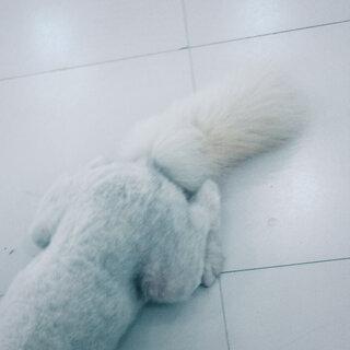 #晒出你的狗尾巴#店里面客人的狗狗