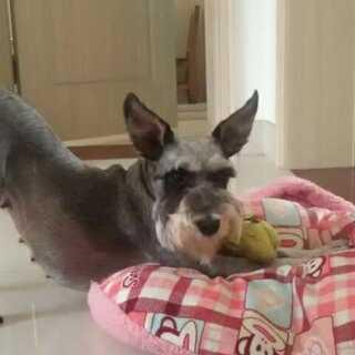 #晒出你的狗尾巴##宠物##理想与现实#😃😃我养了一只散发汉子气息的母狗