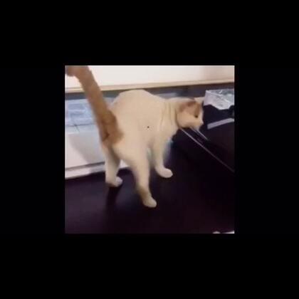 喜豆眼神不好,总是打着打着就找不到对手了,猫呢!我猫呢!出来!!