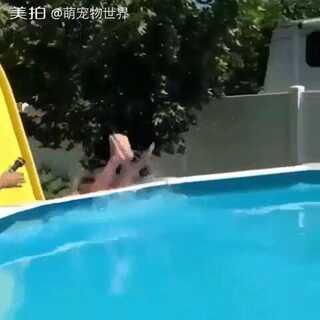 这叫坑儿子,囧o(╯□╰)o,摔了吧!! #搞笑##逗逼##游泳##滑滑梯##聚会#