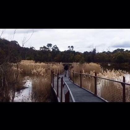#旅行##周末##自驾游##澳洲#Tidbinbilla Nature Reserve