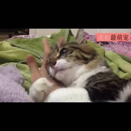 #宠物##卖萌#网友家的喵星人又黏住了推主的手腕了。。。怎麽会有这麽磨人的喵星人啊!😂😂😂