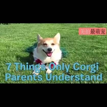 #宠物#大爱小短腿!养了柯基,你一定会知道的七件事儿😍😍