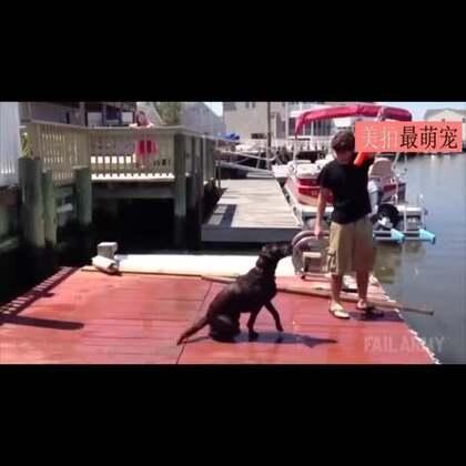 #宠物##搞笑#这估计是一段汪星人最想毁掉的视频了,哈哈哈蠢到家了!😂😂