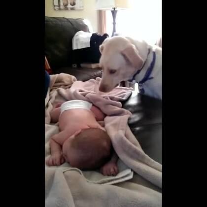 #宠物##涨姿势#看孩子可真累呀!超有爱汪星人帮孩子盖被子😂😂