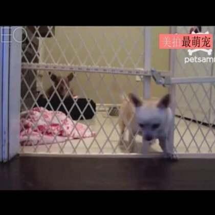 #宠物#兄弟你真好,我先出去啦,你慢慢来!😏😂😂