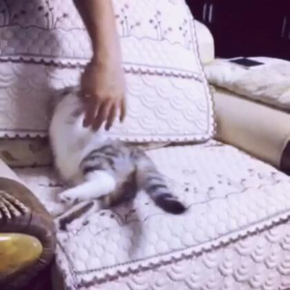 并不会真咬喔!☺#猫咪##喵星人的日常#