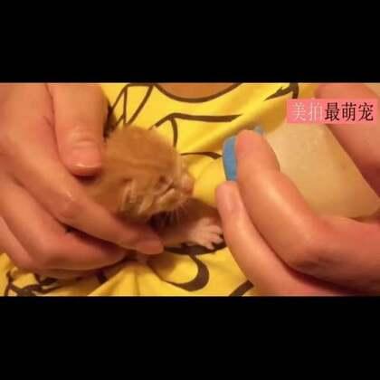 #宠物#岛国一妹子用30秒总结了小猫来家后的30天,萌!😍💘