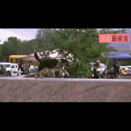 #宠物##涨姿势#跑酷男孩Alex和他的澳大利亚牧羊犬Jumpy,互相陪伴一起跑酷,要耍酷就一起耍! 男孩脸上始终洋溢着微笑,一对好搭档!太帅啦!😍😍