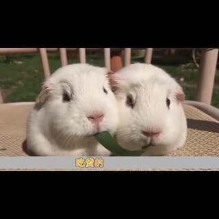 """这些""""吃同一根面条或草结果不小心接吻了""""的剧情,真的是够了。这样秀恩爱,考虑到我们单身狗的感受吗?😂 #吃货##接吻#"""