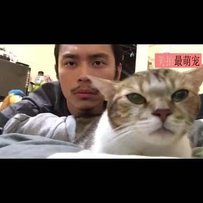 #宠物#网友和他家的猫咪,让我们忘掉所有的伤痛,一起摇摆😂😂😂