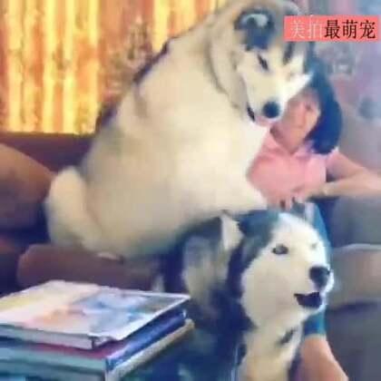 #宠物#有人说,这是金钟国和李光洙..😂😂😂