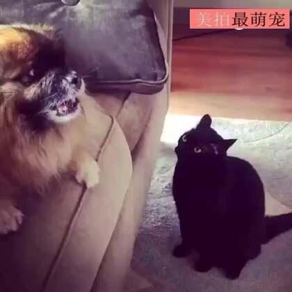 #宠物##搞笑#继续凶,我让你停了吗?!就爱看你生气的样子!😏😏😂