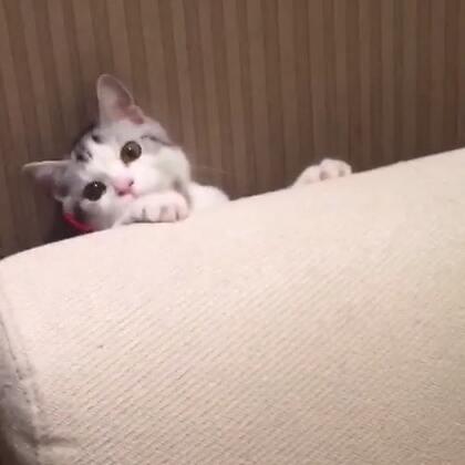 喜欢躲猫猫的猫猫