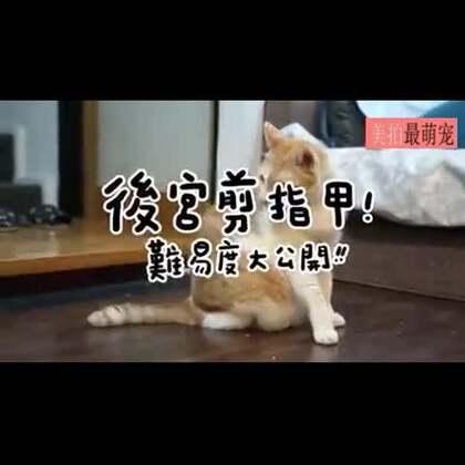 #宠物#如何给性格迥异的喵星人剪指甲,旁白字幕超可爱,很到位!😂
