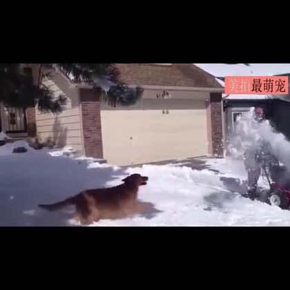 #宠物#第一次瞅见雪的狗狗们,简直玩的不要太嗨!😂😂