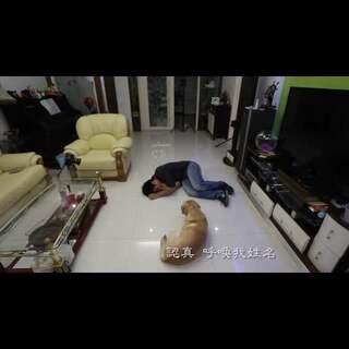 """#小布的日常生活# """"一直有小伙伴想我录这个视频 可是小布那么高冷 怎么会理我 虽然不像电影里那样 英勇救主的狗 但有你一直陪伴已经很幸福了""""#天然暖心宝# #主人装死狗狗的反应# #宠物# https://tb.cn/AvLzImx"""