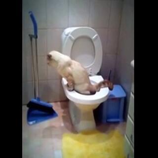 哈哈 神了,真不敢相信自己眼睛~#厕所自嗨##宠物##萌宠##那些成精的宠物#