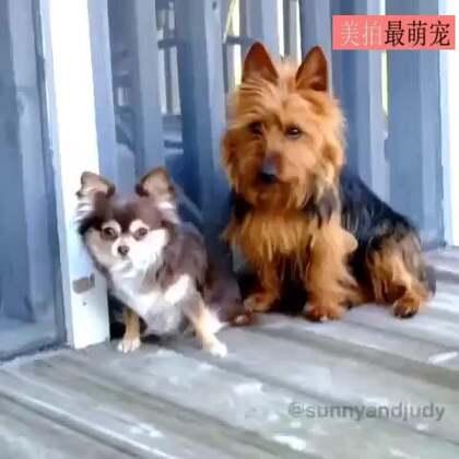 #宠物##搞笑#史上最有心机的狗狗,看醉了!😂