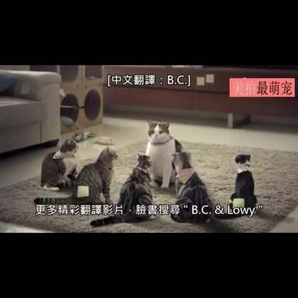 #宠物#最近在泰国出现了一个爆红的广告,内容是讲述猫老大带领它的猫小弟去抵抗人类的洗澡暴政,喵老大表情好有戏喔。😀💘