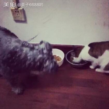 猫咪和狗狗也能友好相处,一起共进晚餐😀#周末##家有萌宠##家有喵星人##家有汪星人#